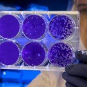 Étude Danoise: du CBD contre les Super Bactéries
