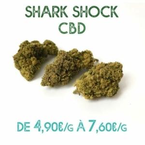 Shark Shock CBD en vente sur Marie-Jeanne d'Arc de 4,90€/g à 7,60€/g