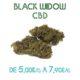 Black Widow CBD en vente sur Marie-Jeanne d'Arc de 5€/g à 7,90€/g